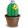 cactus-100x100